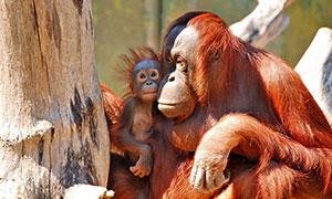 aalborg-zoo