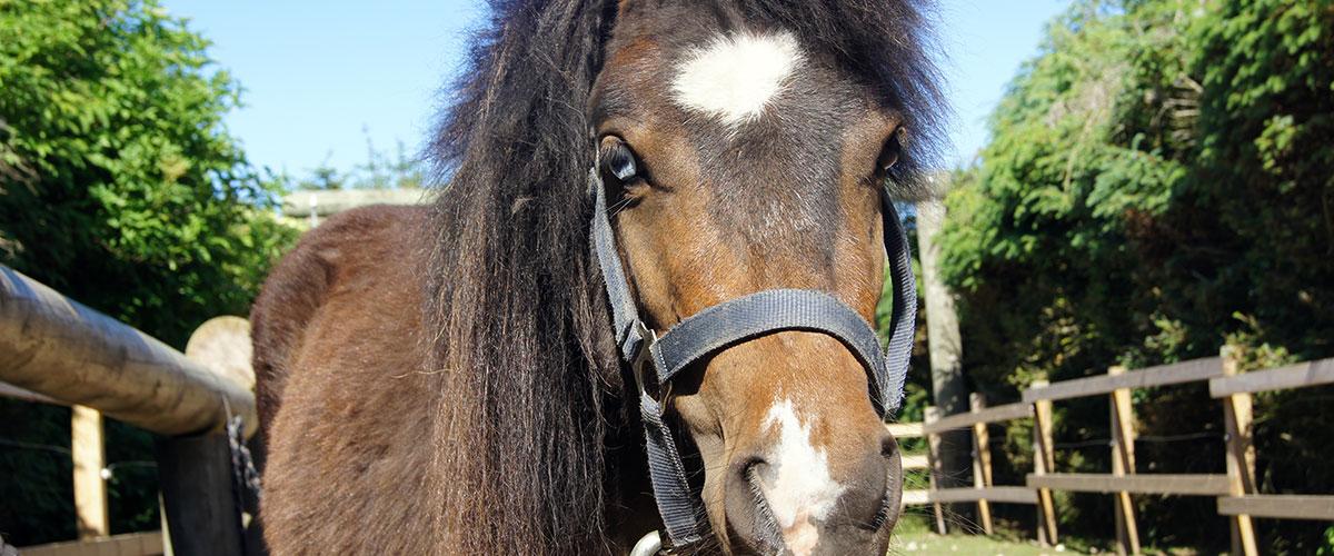 Slider_pony